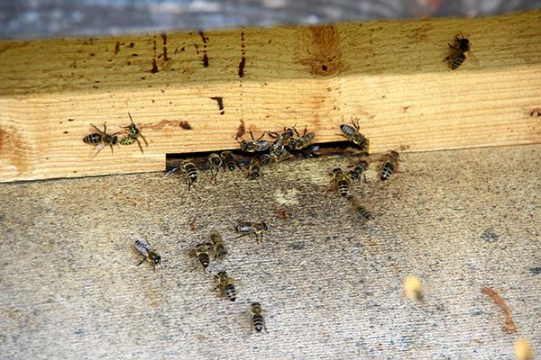 Christine Stadler - Heilkraft der Bienen