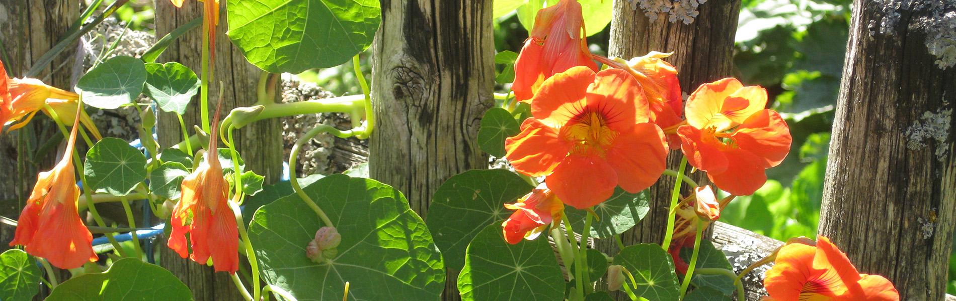Christine Stadler - Heilkraft der Pflanzen